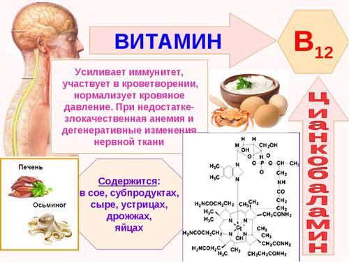 Полезные свойства витамина В12
